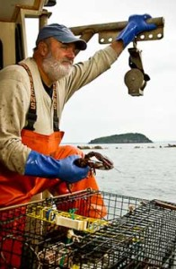 Lobster fishing with Captain John Nicolai